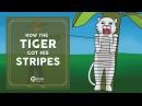 Learn English Listening | English Stories - 12. How the Tiger got his stripes