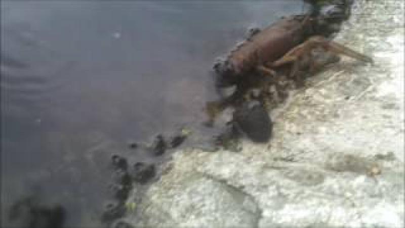 У Козельці отруїли річку, день третій 04 07 16