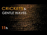 CRICKETS &amp SEA WAVES - Nature SOUNDS for SLEEPING - 11 Hours Long - Sleep Aid - Relaxing Ocean