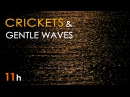 CRICKETS SEA WAVES - Nature SOUNDS for SLEEPING - 11 Hours Long - Sleep Aid - Relaxing Ocean