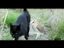 Закадычные друзья Кот и Сова