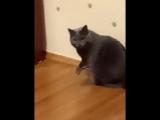 кот кровавый убийца
