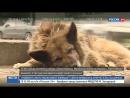 Собачья верность! Преданность собак удивляет и шокирует!
