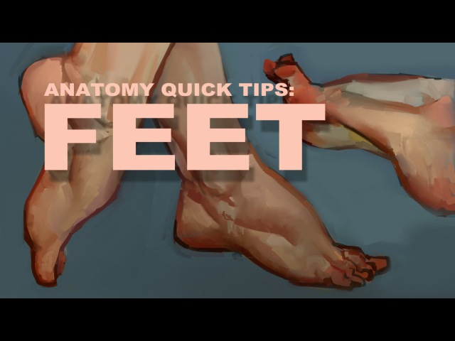 Anatomy Quick Tips Feet