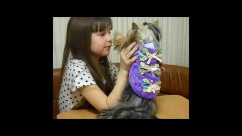 Новые посылки с AliExpress для Шерочки Домик понравился собачкам