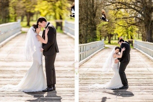 Angry Birds VS Свадебный фотограф