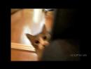 Мой кот-Идиот. Приколы с Котами