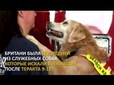 История собаки, которая 15 лет назад в Нью-Йорке спасала людей