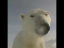 Мир глазами полярной медведицы