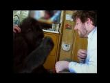 [eng] Koko: The Gorilla Who Talks to People [HD1080p]