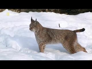 NG Бойцовский клуб для животных - Animal Fight Club (S02, 2014)1