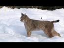NG Бойцовский клуб для животных Animal Fight Club S02 2014 1
