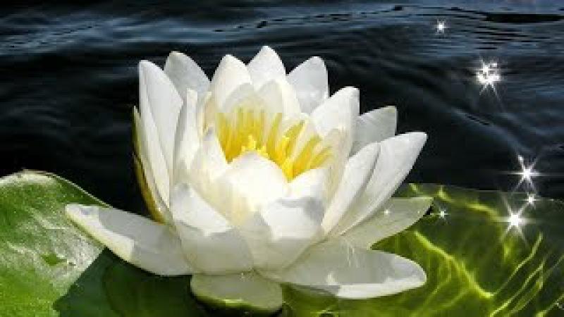 Заколка Лотос из фоамирана. Мастер класс \ Master Class for beginners: Lotus hairgrip from foamiran