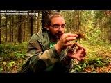 Гриб-зонтик - деликатес, многими принимаемый за мухомор, www.grib.tv