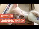 Kitten Feeds Herself From a Milk Bottle Video 2017 | Daily Heart Beat