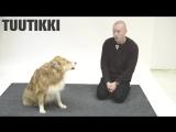 Как собаки реагируют на лай... человека