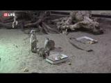 Следим за забавными зверьками Московского зоопарка в прямом эфире