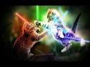 игривый кот и пушистик Байла