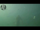 8 русалок,снятых на видео