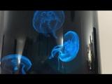 Jellyfish Art nanotank combined with Philips Hue 2.0