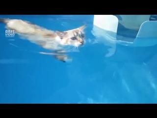 Плавающий котейка