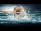Прикол с котом. Мой кот в ванне )