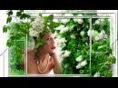 Черёмуха в цветуВиктор Перевал2017