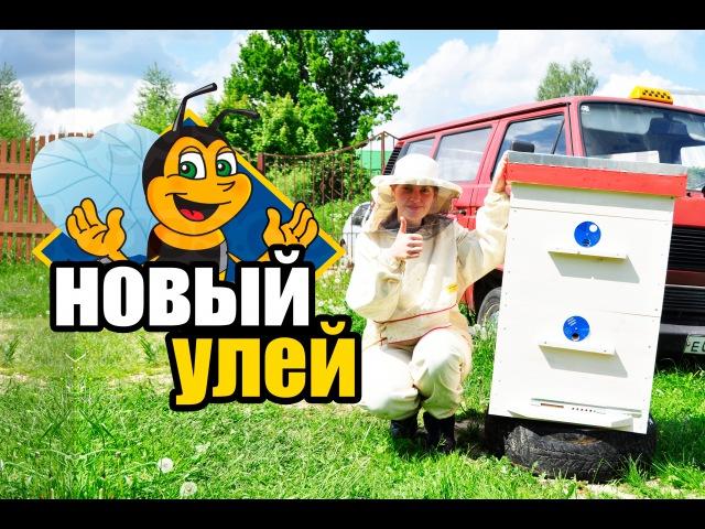 Пчёлы 9. Пересадка пчел в новый улей. Постановка магазина на улей