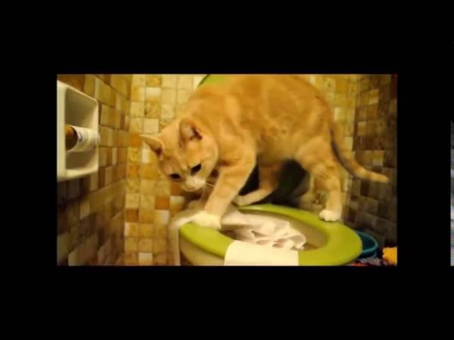 Котэ и туалетная бумага