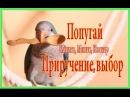 Попугай Калита Монах Квакер выбор приручение