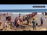 Отдыхающие на пляже спасли акулу, США, штат Массачусетс