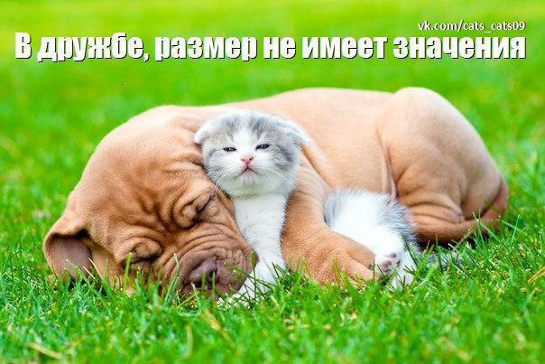 https://pp.vk.me/c626130/v626130406/3d19/yo_4W4booJ4.jpg