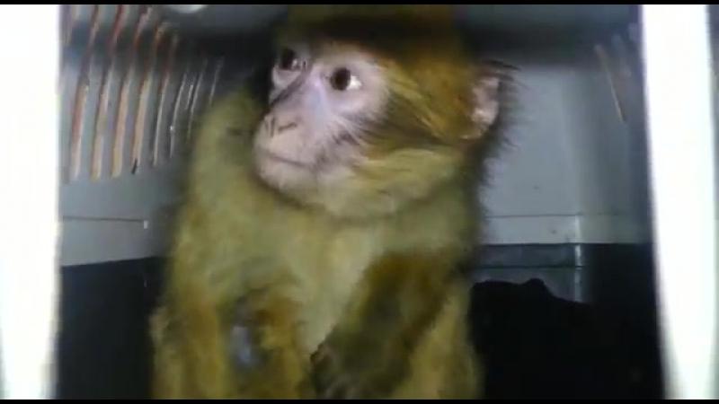 На границе Ростовской области задержали обезьян и кенгуру из Украины