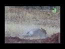 BBC Заповедник в дебрях Африки 17 серия Реальное ТВ животные 2006