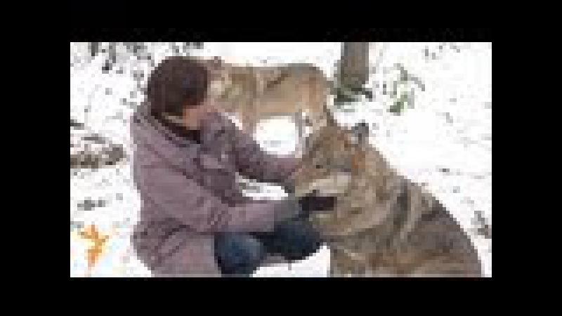 Алена Селях— гадавальніца ваўкоў / A.Selach - the mistress of wolves