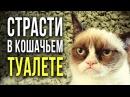 ☢ Страсти в кошачьем туалете [Олег Айзон]
