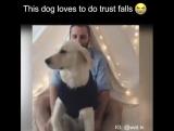 Собака, которая очень любит падать в объятия)