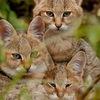 Удивительная природа | красивые животные