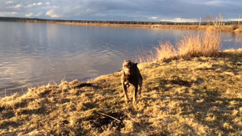 кавголовское озеро