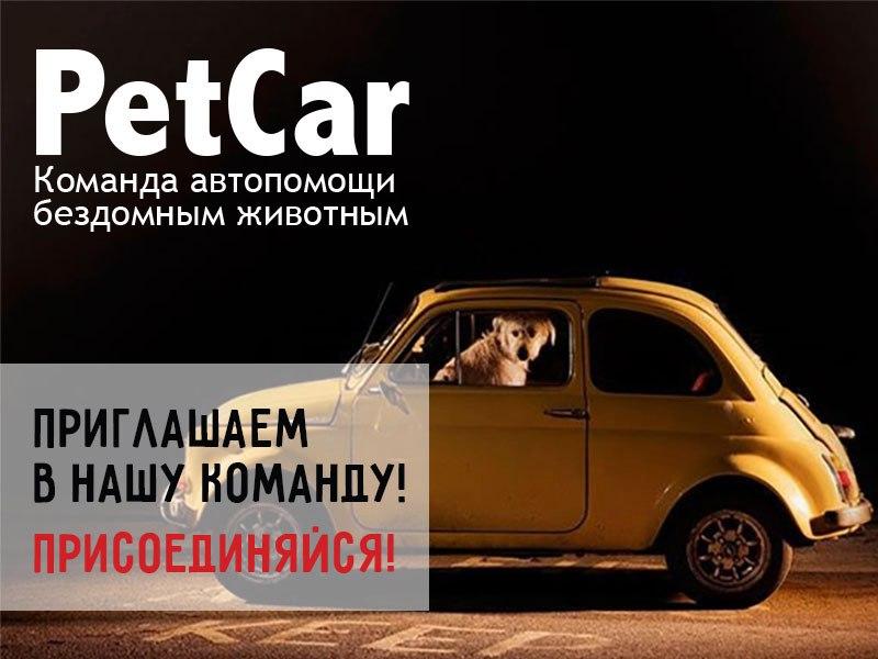 Автопомощь бездомным животным Беларуси