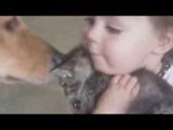 Как девочка любит котёнка, ПОЗИТИВ))