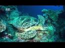 Азия Чудеса голубой планеты Семь континентов Animal planet HD