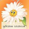 Цветы с доставкой в Калининграде - Ромашка39