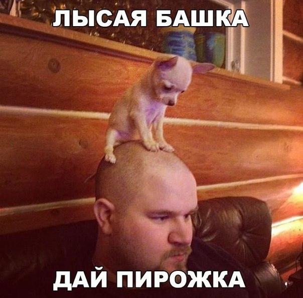 Фото №456261307 со страницы Марины Явтушенко