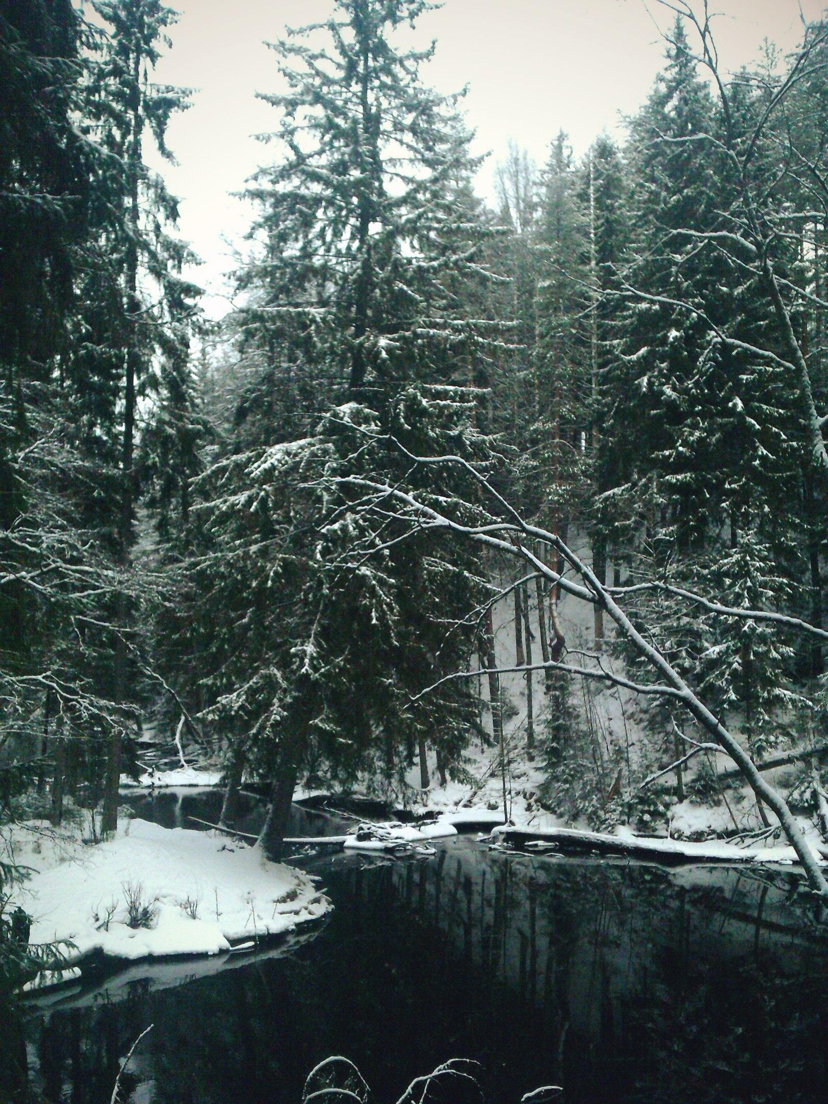 Поселок Рощино. 8 фото Карельского леса на пике зимы.