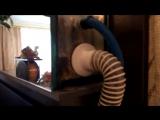 Фитофильтр. Домашний аквариум доступен для всех!
