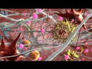 Механизм действия биоревитализации