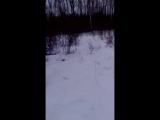 Снежная тренировка бультерьера Йохана
