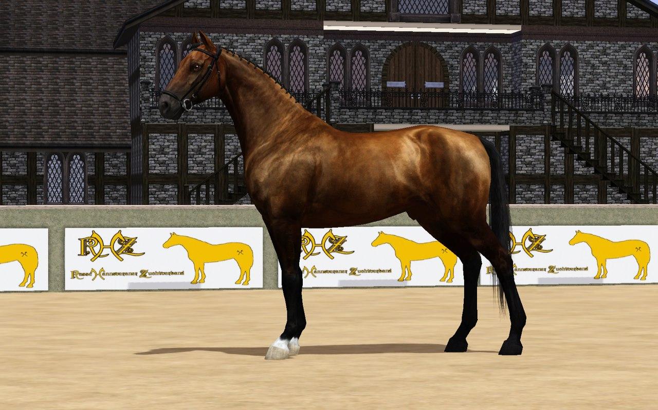 Регистрация лошадей в RHF 2 TCD9aPXv7Dk
