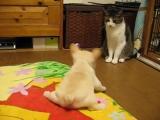 Первая охота на кота [480]